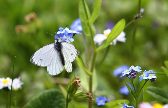 A butterfly sits on a flower on May 15,