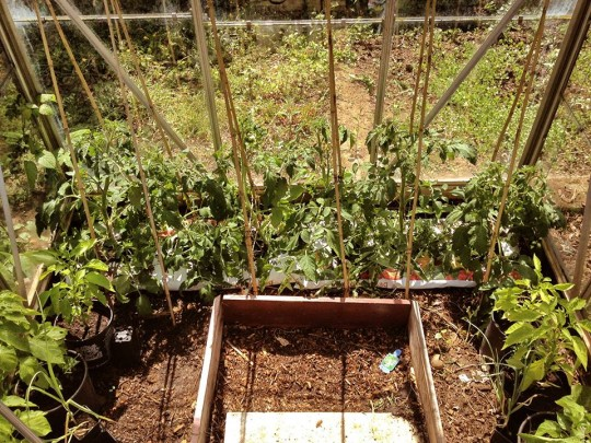 Toms, Peppers etc
