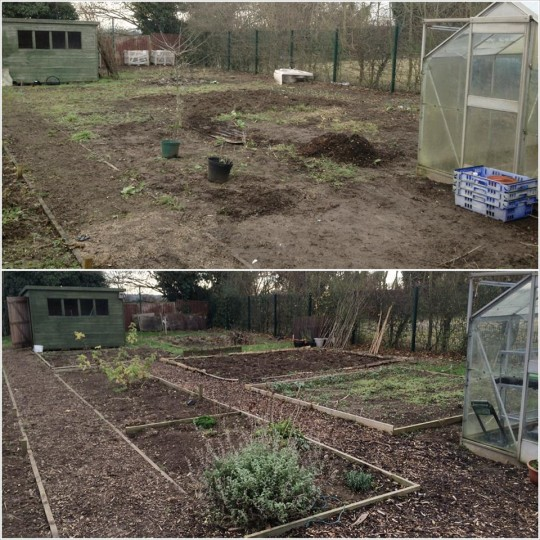 Allotment 2013